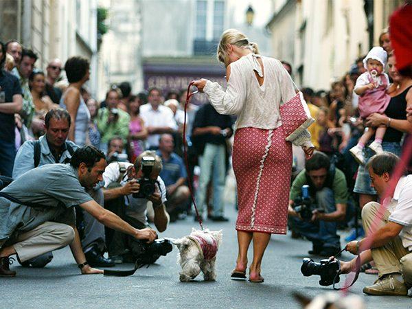 Chien Chic, Paris